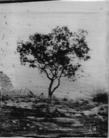 Arbre 03 13,2 x 10,5 cm