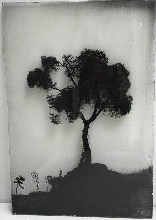Arbre 07 GF 45 x 31 cm