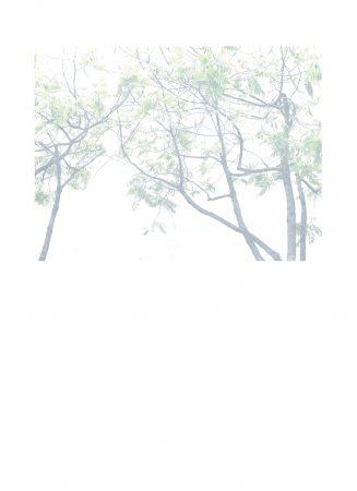 Arbre 1,  série Photos Blanches, 2020, tirage photographique jet d'encre sur papier Canson 244g, crayon de couleur blanc, 53 x 39 cm ©CatherineNoury