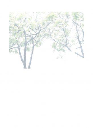 Arbre 2,  série Photos Blanches, 2020, tirage photographique jet d'encre sur papier Canson 244g, crayon de couleur blanc, 53 x 39 cm ©CatherineNoury