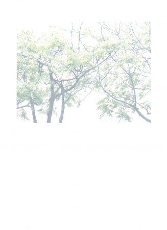Arbre 3, série Photos Blanches, 2020, tirage photographique jet d'encre sur papier Canson 244g, crayon de couleur blanc, 53 x 39 cm ©CatherineNoury