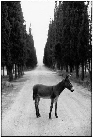 Robert McCABE, Thessaloniki. Lyndon Johnson's Donkey © galerie Sit Down