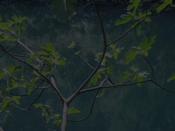 Série Forêts, 2012, Digigraphie contrecollée sur aluminium, 30 x 40 cm ©CathertineNoury